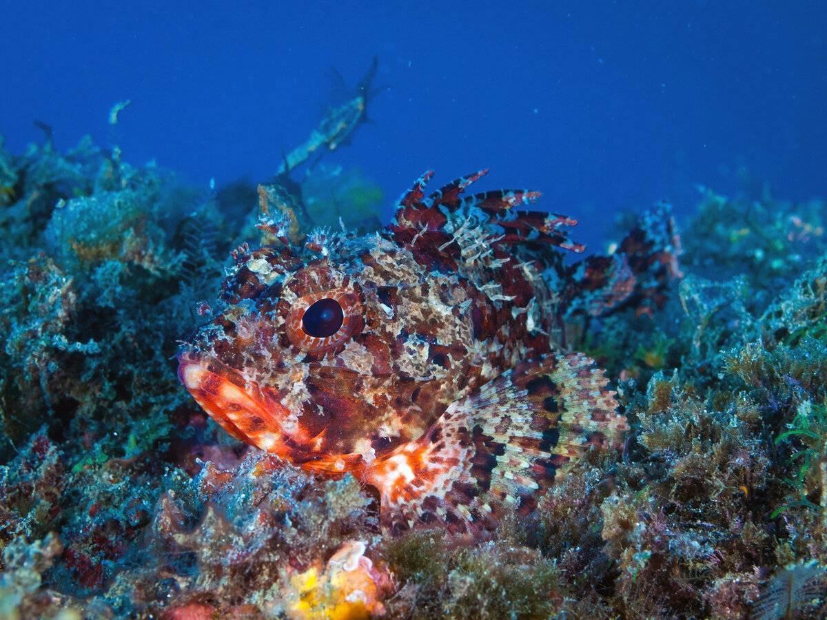 Рыбы черного моря: какие водятся, их виды (ядовитые, хищные и другие)