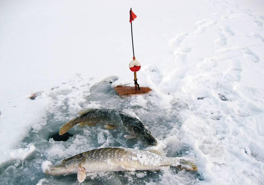 Ловля щуки зимой - места ловли, снасти, приманки, советы
