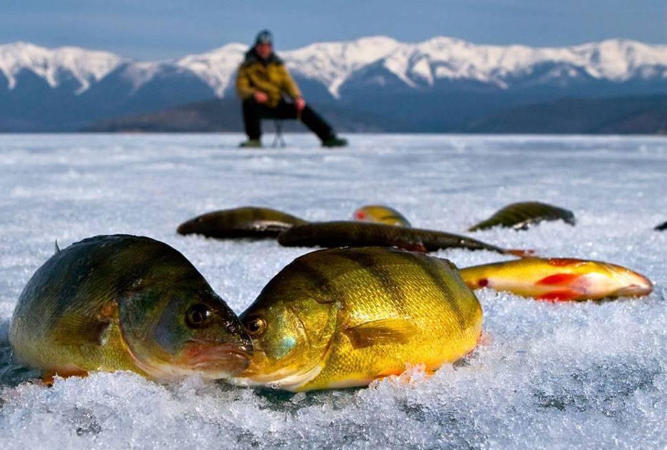 В помощь начинающему рыболову