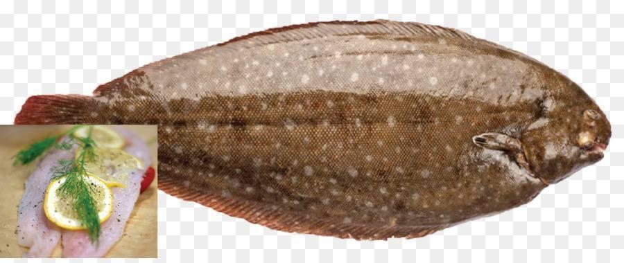 Морской язык. состав, польза и вред рыбы морской язык. морской язык в кулинарии