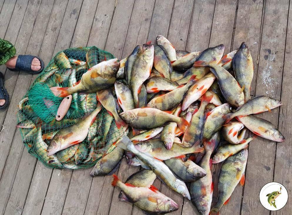 Ответ рыбоохраны 2020: сколько суточных норм можно увезти с водоёма, чтобы без штрафа