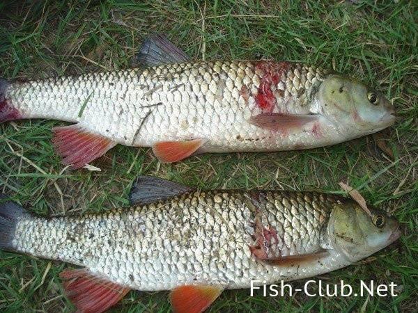 Рыбалка в брянске и брянской области