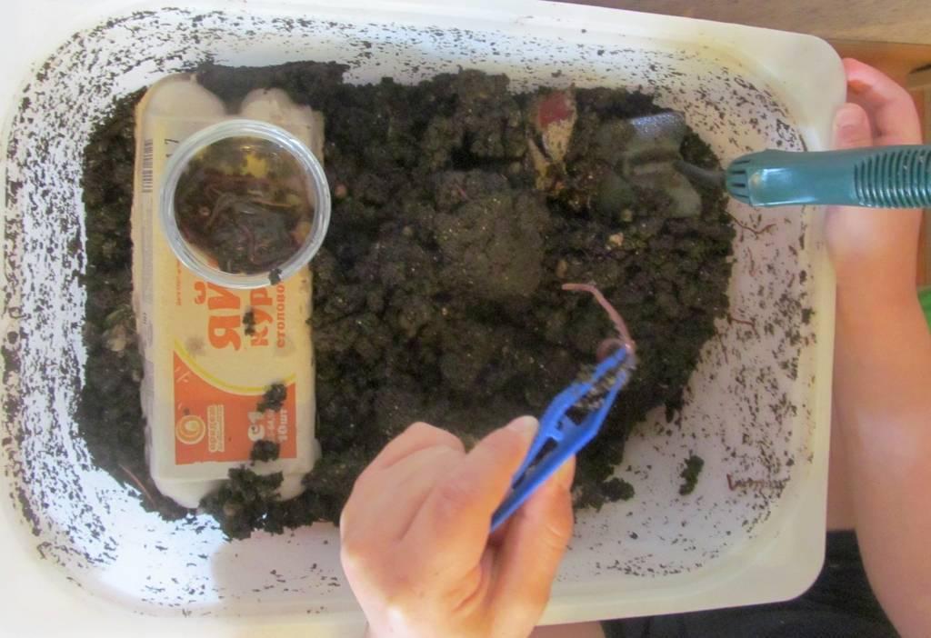 Как хранить опарыша для рыбалки в домашних условиях?
