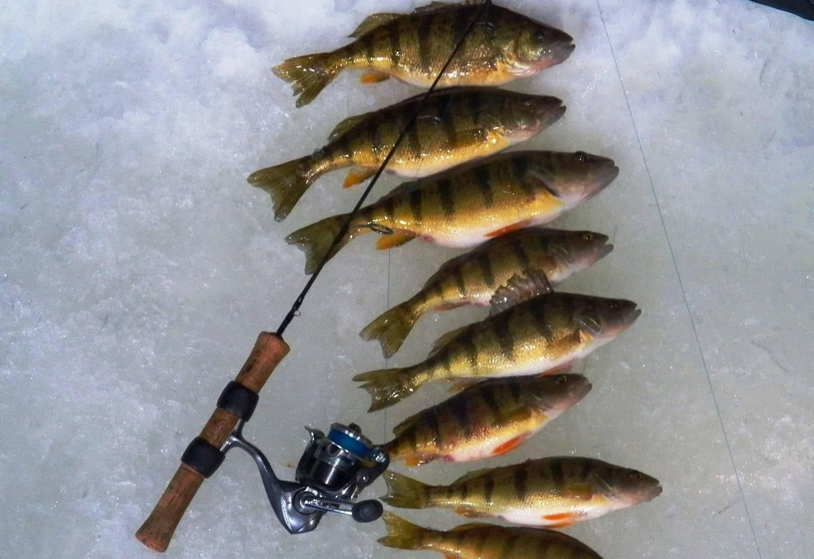 Как ловить окуня на блесну зимой: техника блесенения, самые уловистые приманки