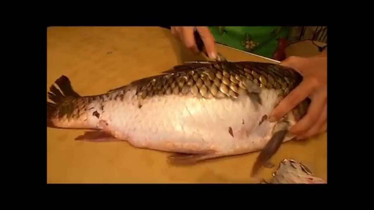 Как почистить и разделать рыбу правильно: способы обработки на филе, что сделать, чтобы не летела чешуя, как потрошить и другие рекомендации + видео
