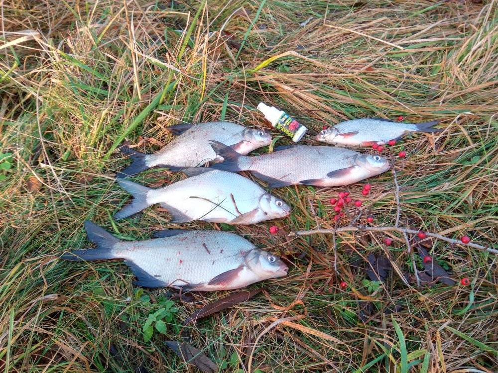 Рыбалка в калининградской области в настоящее время