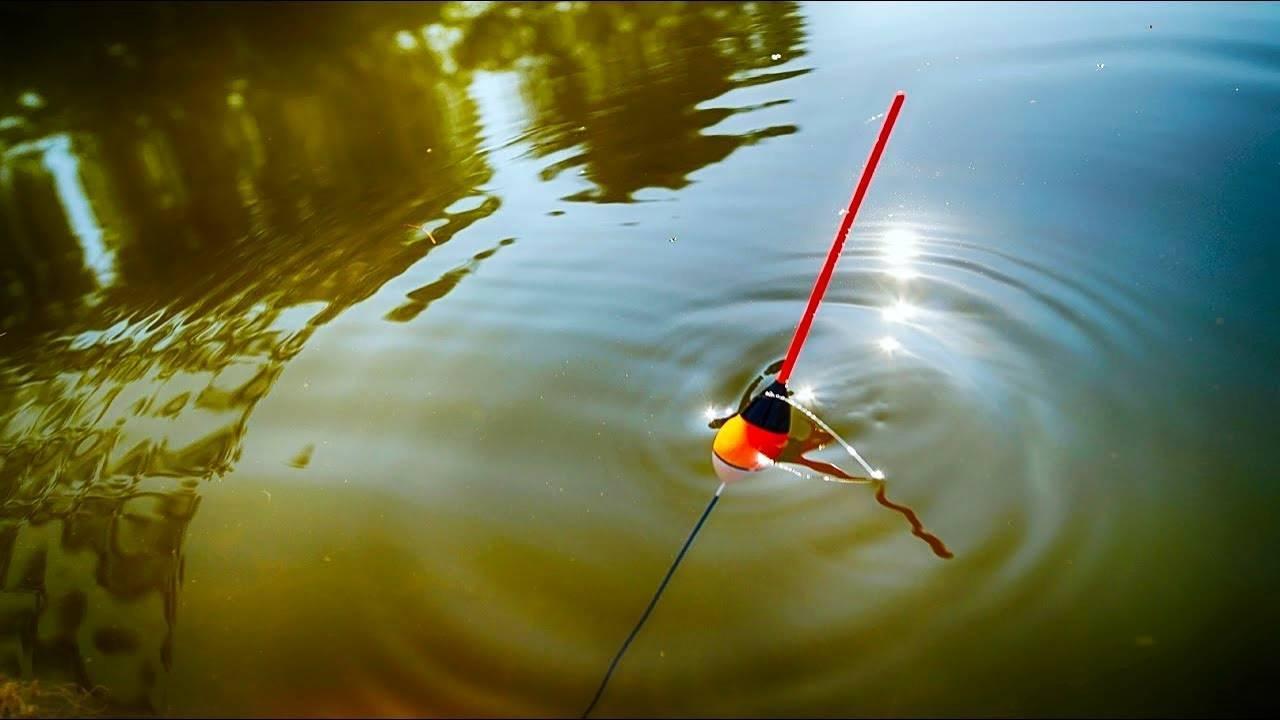 Ловля щуки поплавочной удочкой на живца: правильная оснастка на поплавок и лучший живец на щуку
