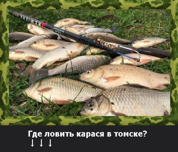 Почему рыба не клюет? влияют ли ветер, дождь, давление и погода на рыбалку