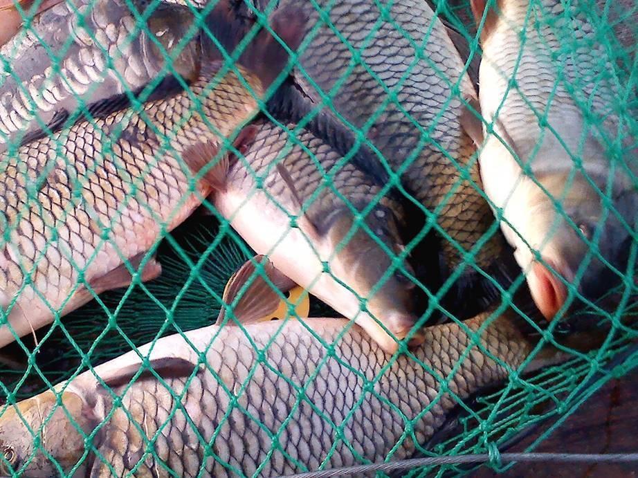 """Егорьевский рыбокомбинат """"цна"""" - платная рыбалка в подмосковье"""