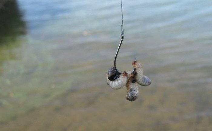 Ловля черноморской креветки – лучшие способы