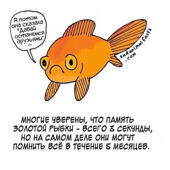 Сколько секунд длится память у рыб: мифы о домашних рыбках. есть ли память у рыб — мифы и реальность