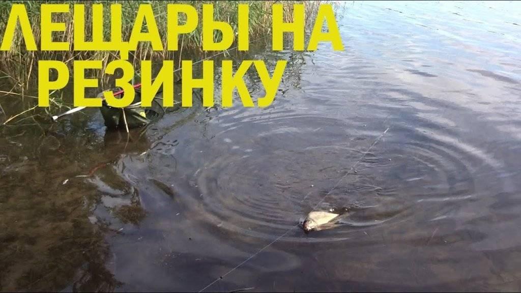 Ловля леща на резинку: как правильно сделать и ловить на реке