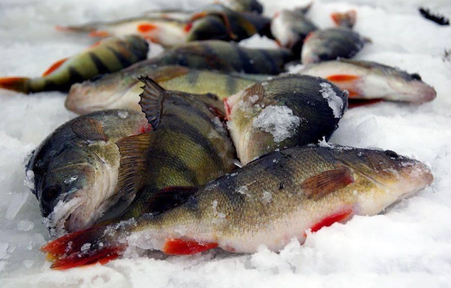 5+5 хитрых лайфхаков и полезных советов для рыбалки: секреты бывалых для успешного улова