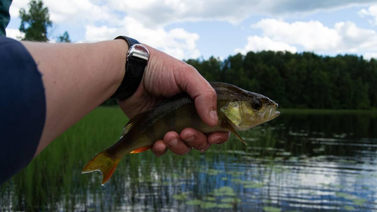 Рыбалка на вуоксе места