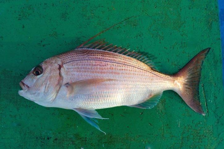 Рыба карась: описание, сколько живет, как выглядит, особенности нереста, отличия от карпа