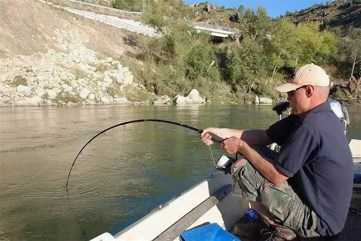 Ловля сома на спиннинг: приманки, способы ловли