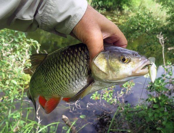 Рыбалка в Сызрани — лучшие места для ловли, какая рыба водится