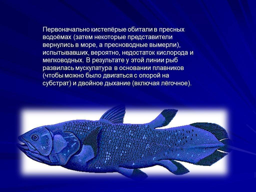 Как спят рыбы в аквариуме ночью: фото, видео