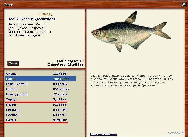 Рыбаки с высоким уровнем рыболовного мастерства смогут поймать синец: советы
