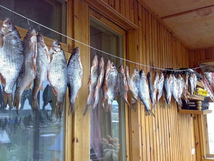Лещ вяленый: калорийность на 100 грамм, польза и вред для организма, чем полезна рыба в других видах?