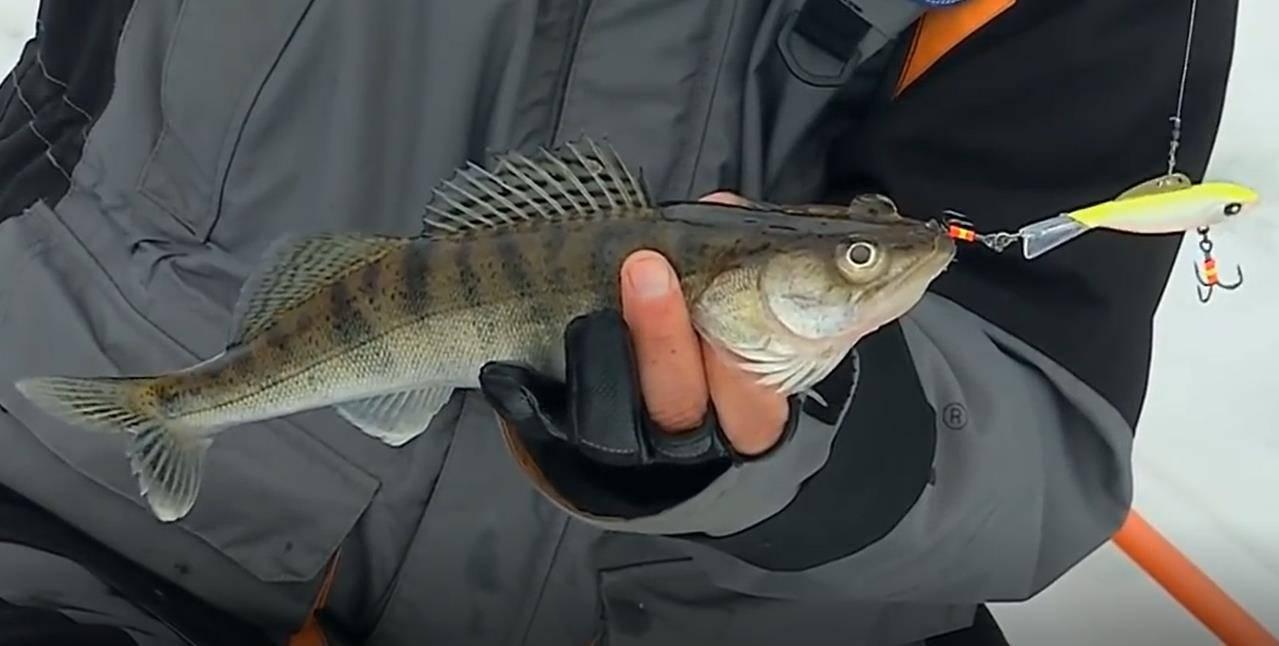 Ловля судака на спиннинг весной, летом и осенью: снасть - спиннинг, оснастка и техника ловли