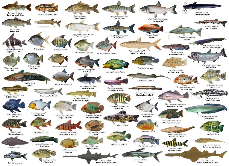 Рыба-нож как правильно ухаживать за аквариумной рыбкой