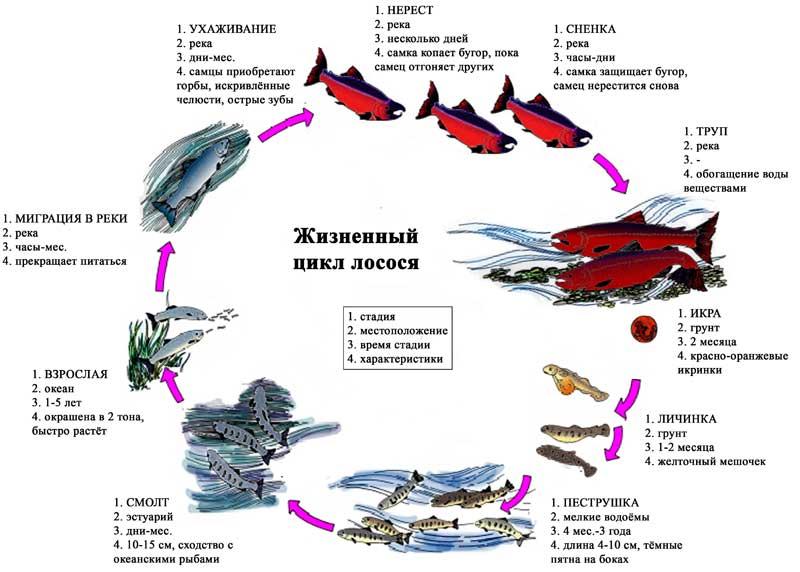Рыба простипома – редкий деликатес