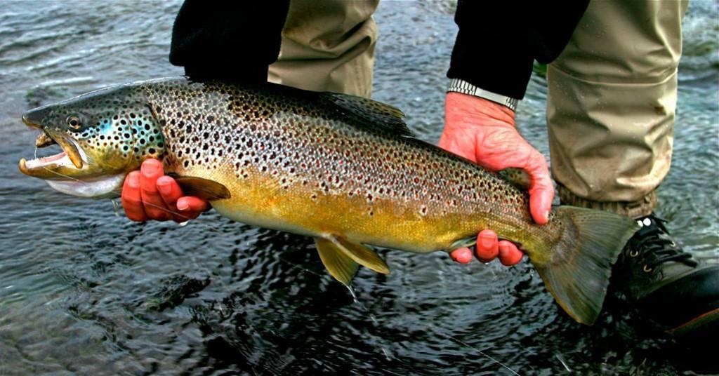 Снасти для ловли лосося иособенности проводки