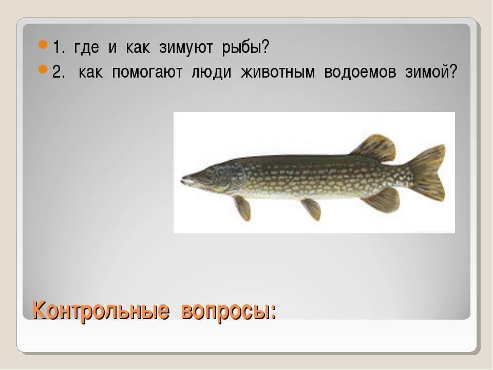 Все нюансы поиска рыбы зимой | мастер-фишер