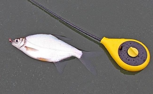 Ловля густеры в феврале - читайте на сatcher.fish