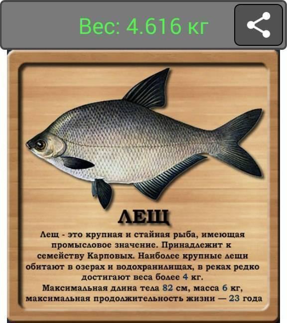 Пресноводная рыба синец: фото, особенности размножения и ловли особи, ареал обитания рыбы синец