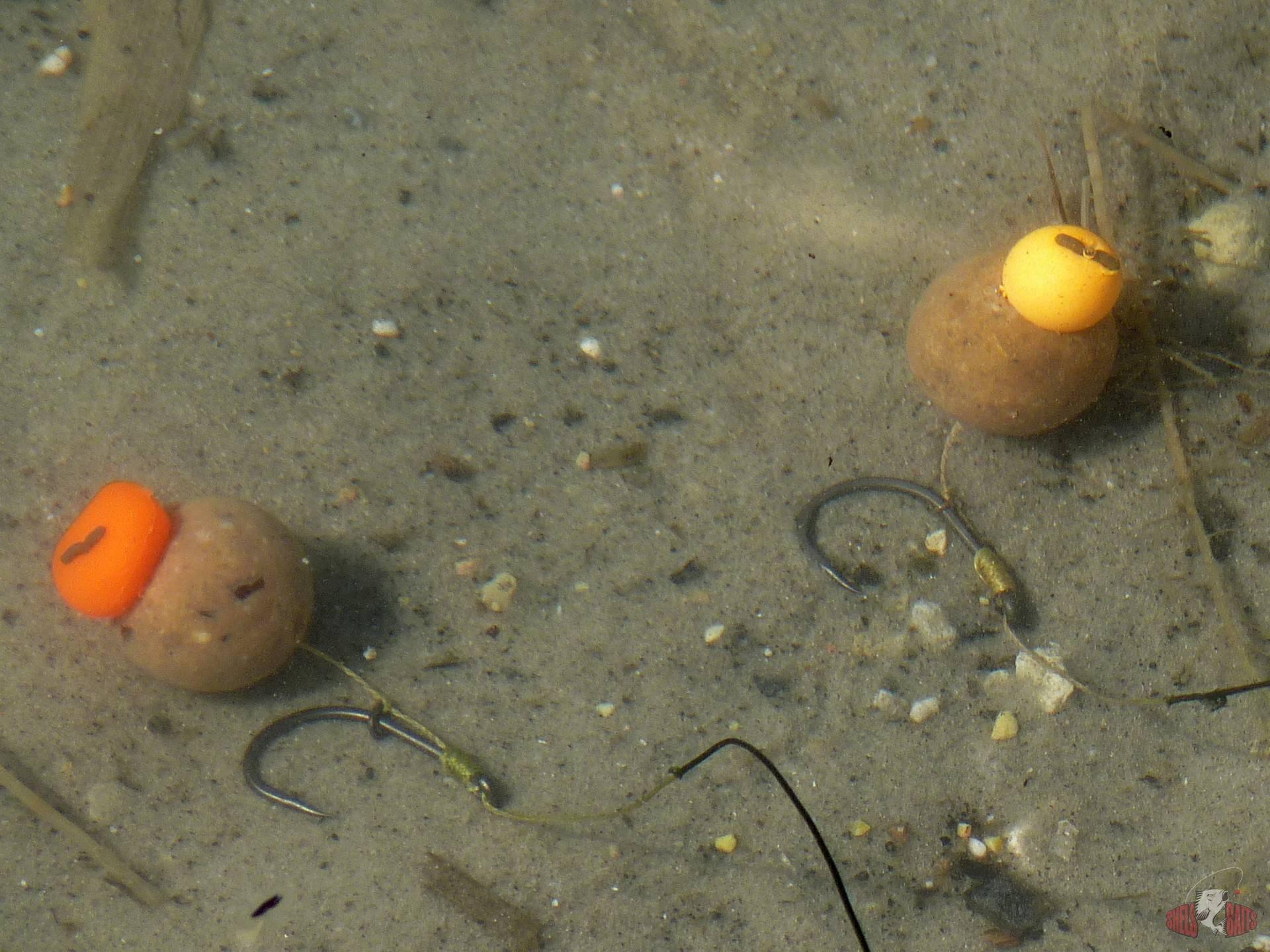 Лучшая снасть для ловли карпа: разновидности оснастки, выбор наживки для донки и поплавочной удочки