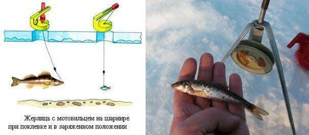 Как поймать живца