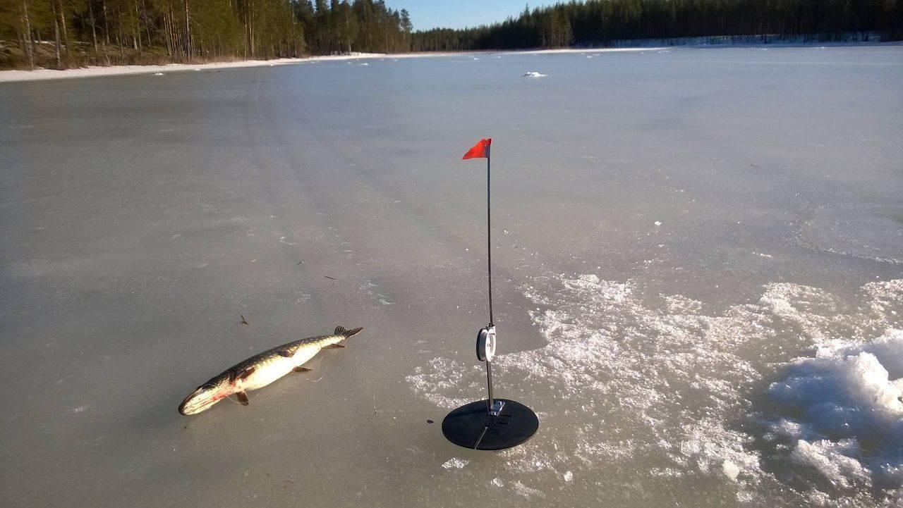 Ловля налима зимой нажерлицы