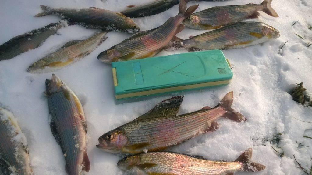 Рыбалка на енисее зимой: видео, особенности рыбалки в красноярске, ловля хариуса в марте