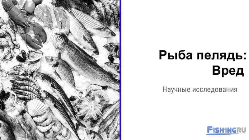 Рыба сырок картинки
