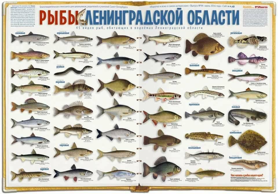 Озера ленинградской области — карта, базы отдыха и пляжи, рыбалка, как добраться, фото, где находятся