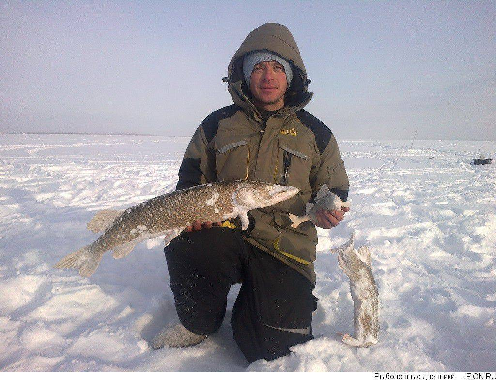 Якутск - календарь рыболова. рыбалка в якутске, график клёва рыбы.