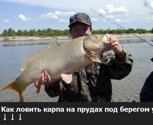 ✅ рыбалка на бисеровом озере - https://xn----7sbeepoxlghbuicp1mg.xn--p1ai/