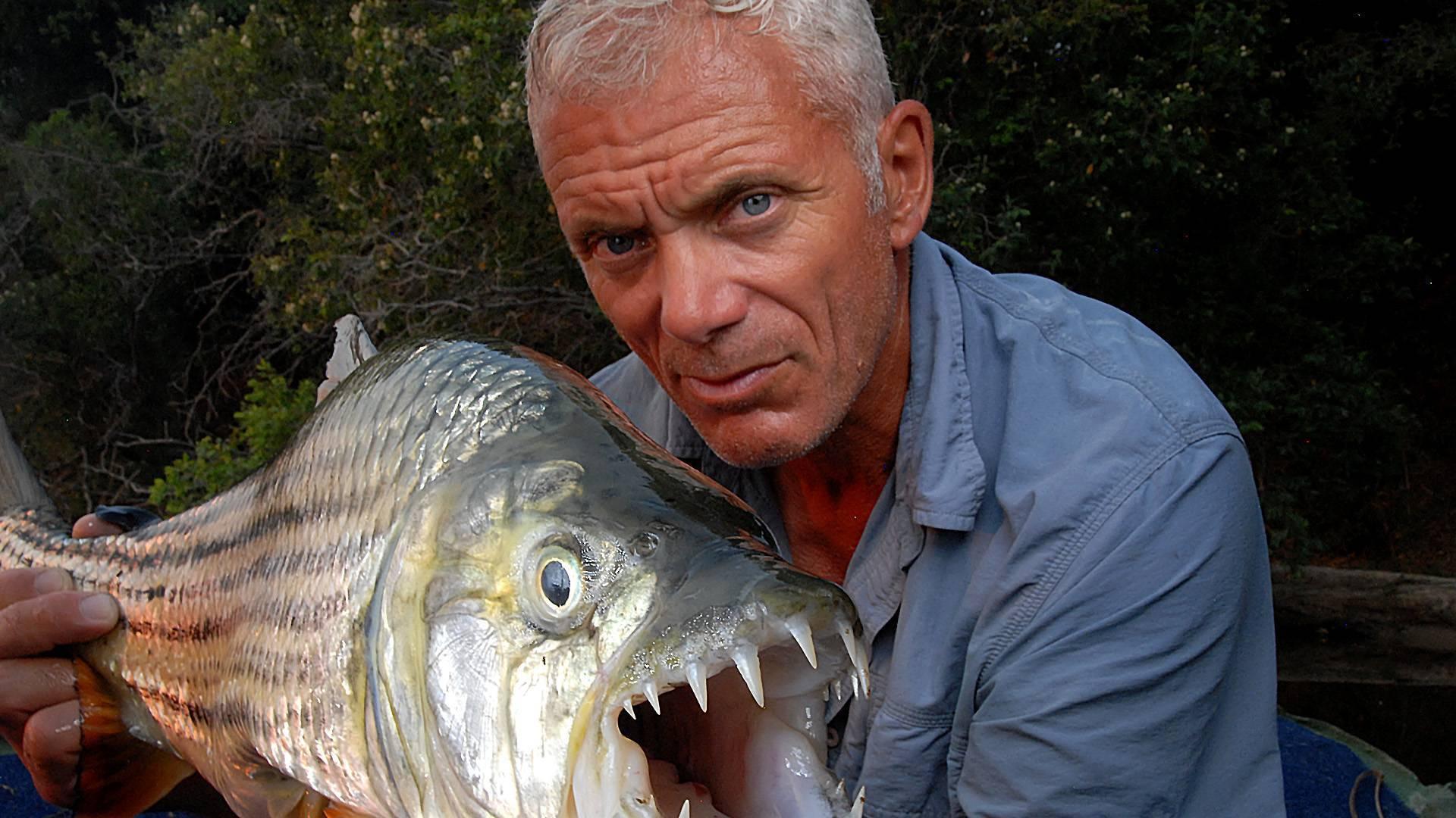 Тигровая рыба голиаф