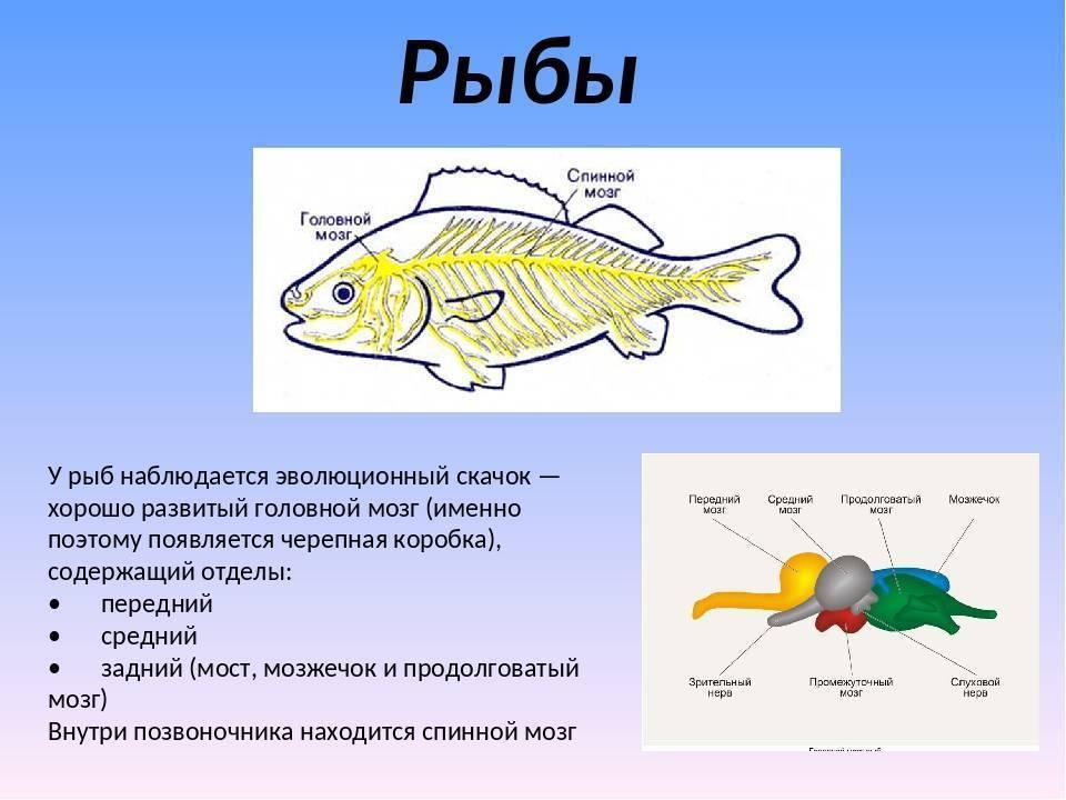 Память у рыб – сколько времени она может запоминать те или иные события
