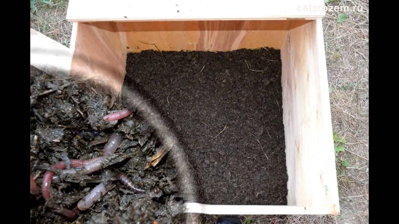 Разведение червей в домашних условиях и как бизнес. руководство