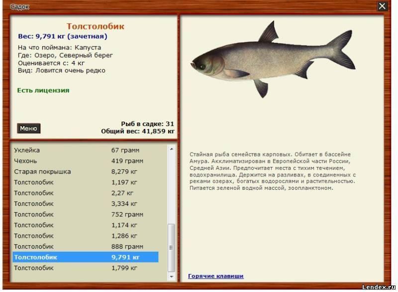 Рыбалка в бресте и брестской области: платная и бесплатная рыбалка. куда поехать в брестском районе и какая рыба клюет?