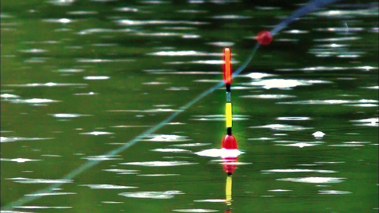 Щука на живца: ловля поплавочной удочкой