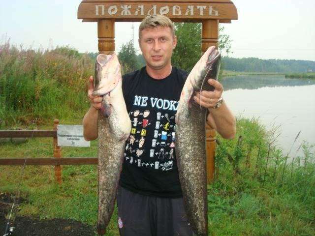 Рыбалка в красногорске: крх биг-карп, услуги и цены, отзывы посетителей о красногорском платнике на плотине