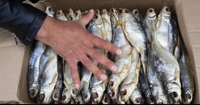 Как вялить рыбу в домашних условиях: рецепты засолки, калорийность, сколько нужно завяливать по времени
