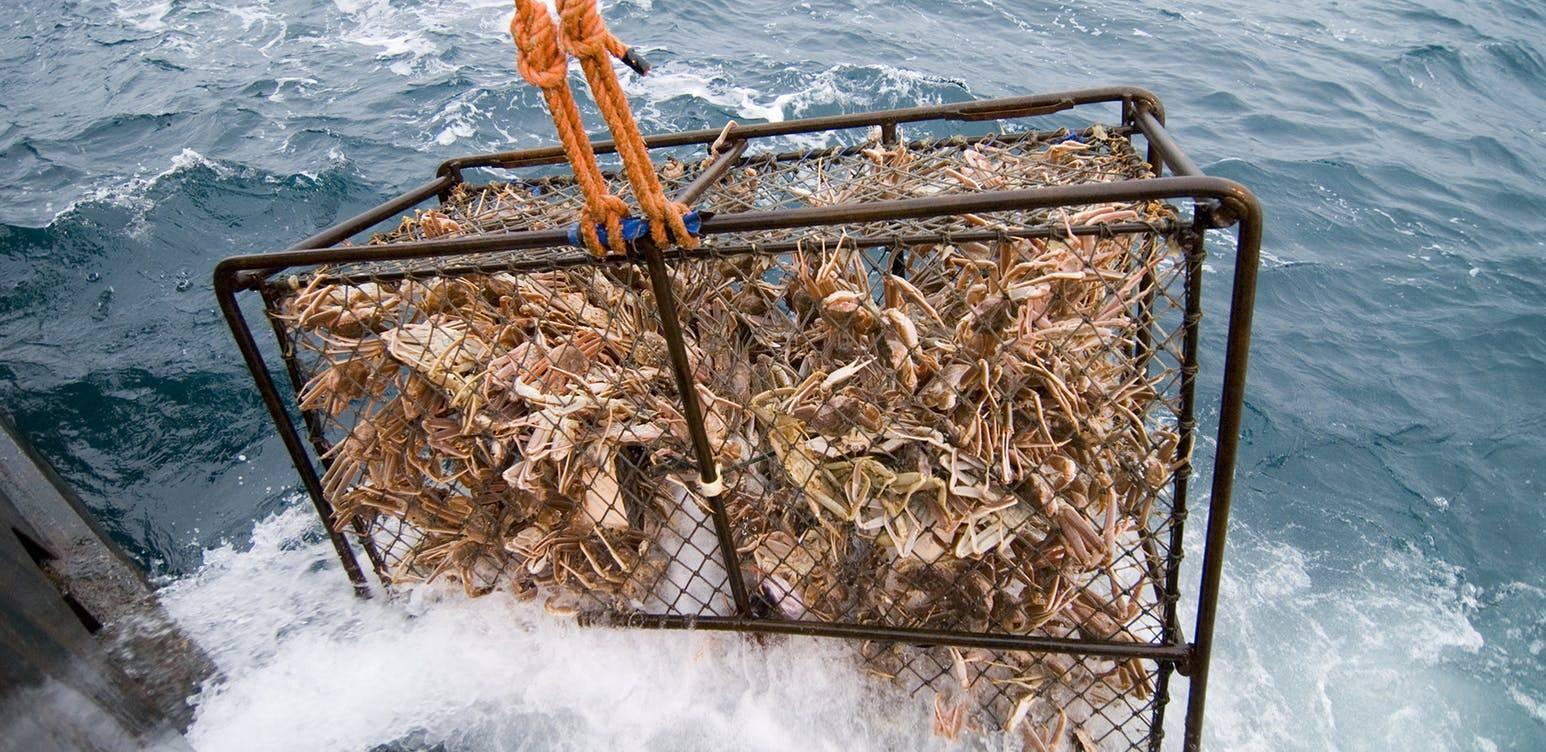 Как ловить крабов на черном море голыми руками и с использованием подручных средств