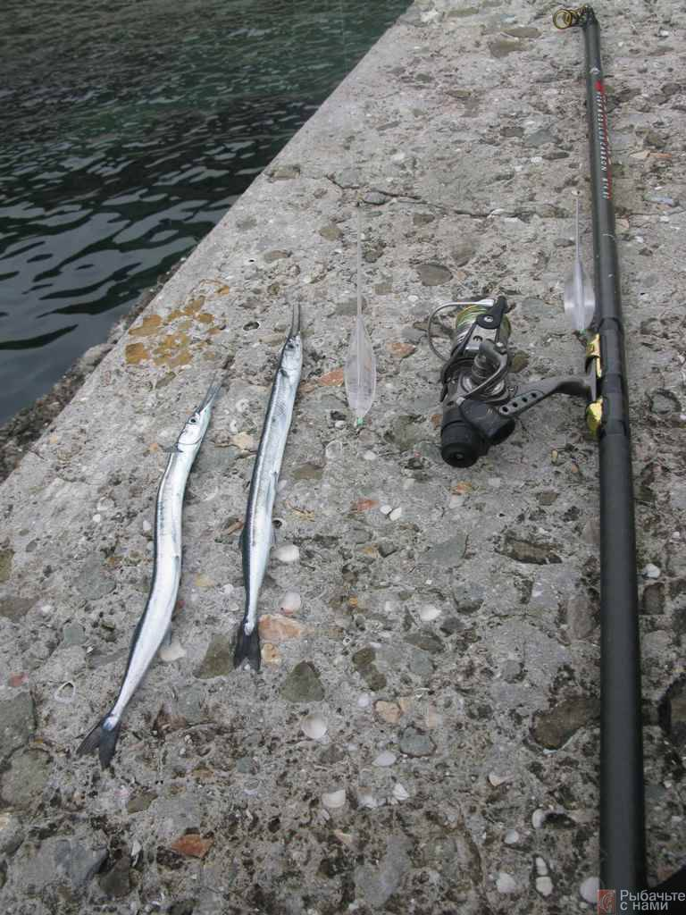 Морская рыбалка. пилькеры – рыбалке.нет