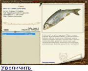 Елец: описание рыбы, фото, повадки, ловля и выбор снасти