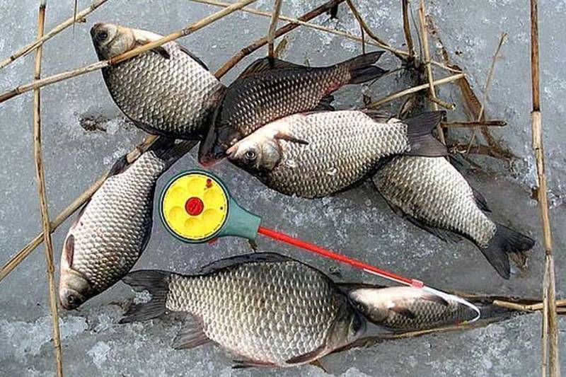 Зимняя рыбалка на карася в реке, пруду и озере: техника, оснастка, прикорм